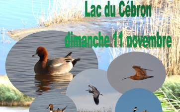 affiche Cébron